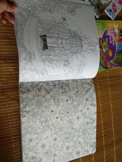 正版 我的神秘花园+童话梦境+奇幻森林+时间旅程(全4册)手绘填色书 秘密花园 赠24彩铅 晒单图