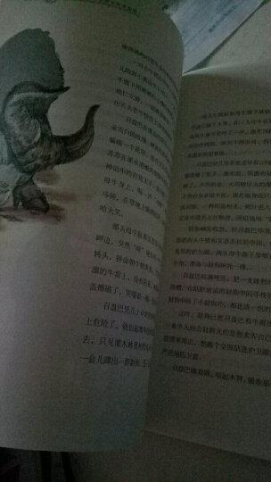 第七条猎狗(暖心美读书:名师导读美绘版) 晒单图