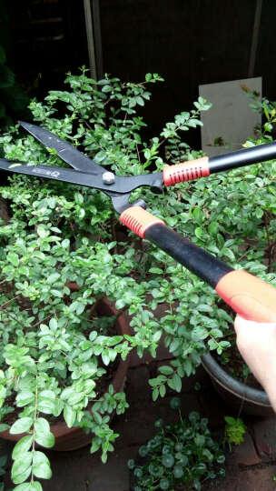 园林修剪绿篱剪园艺修枝剪篱笆剪 充电式修枝机 电动绿篱剪绿篱机 电动修剪机 茶叶茶树修剪机 双刃绿篱机 不含电瓶 晒单图