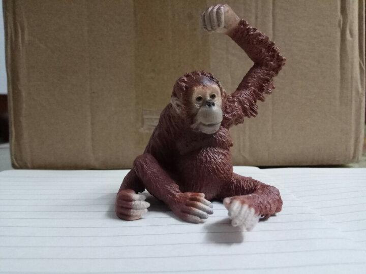 德国思乐Schleich仿真动物迷你模型玩具野生动物系列猩猩猴子等动物玩具孩子礼物成年礼物 S14717长臂猴 晒单图
