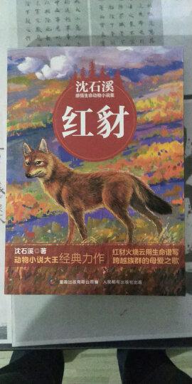 动物小说大王沈石溪感悟生命书系(1-4) 晒单图