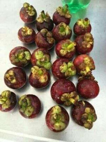 树懒果园 泰国进口新鲜山竹水果 1kg 晒单图