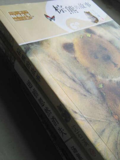 翅膀忽然消失+树上的眼睛+棕熊的故事+小乌龟阿土共4册  儿童书 晒单图