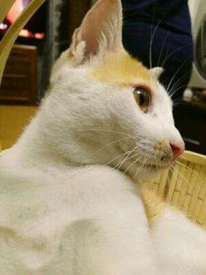 越帝(YUEDI)水晶猫砂猫砂无粉尘猫沙3.8L 原味 晒单图