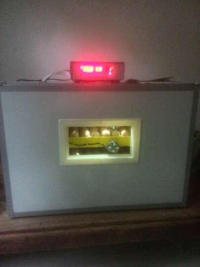 佳裕 孵化器全自动小鸡孵化机家用型鸡蛋鸟蛋孵化箱商用鸡苗鸭苗孵化盒 240枚 晒单图
