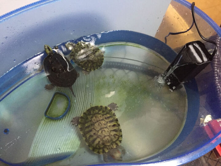 森悠(SARYOR)鱼缸水族箱龟缸过滤器超低水位静音内置抽水泵净水器配过滤棉高性能瀑布式冲 CX200过滤棉(两片装) 晒单图