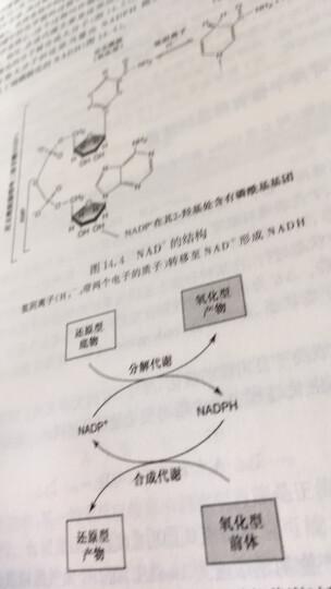 生物化学与分子生物学要点速记 晒单图