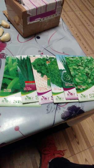 堇辰  蔬菜种子盆栽蔬菜水果种子草莓香葱韭菜种子家庭阳台种植 四季可播 油菜花150粒 彩包装 晒单图
