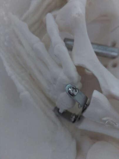 海医(Hey Model) 医用人体85cm人体骨架模型 人体骨骼模型 脊椎模型 肌肉色 022005附脊椎神经椎间盘 晒单图