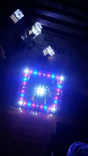 led灯珠发光二极管插脚信号指示灯水晶灯光源聚光F5mm圆头(100个) 透明胶体 紫光 晒单图