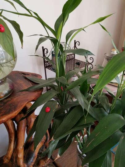 小蘑菇多肉微景观盆栽盆景摆件配件饰品 七星瓢虫/1个1.4厘米*1厘米 晒单图