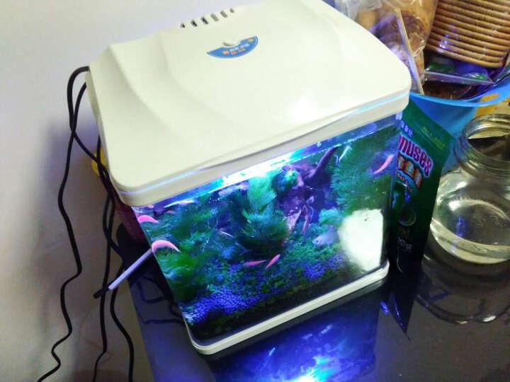 森森(SUNSUN)桌面小鱼缸 生态玻璃水族箱 HR230 含LED灯 晒单图