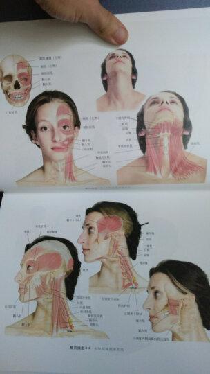 基础临床按摩疗法:解剖学与治疗学的结合 晒单图