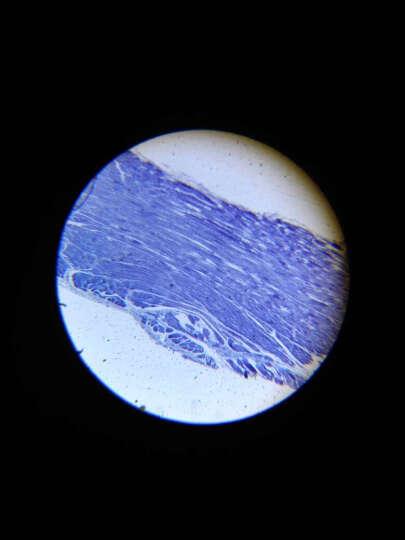 萨伽(SAGA) 生物显微镜标本切片套装载玻片盖玻片 学生观测动植物人体组织细菌 孩子礼物 25片装 晒单图