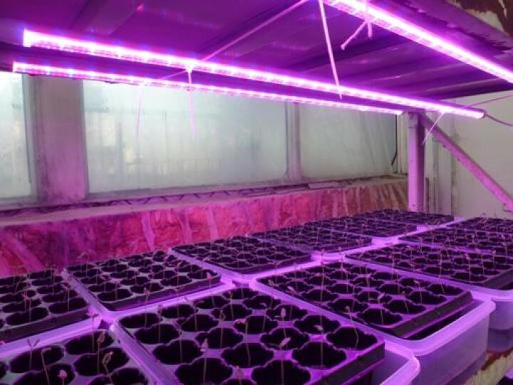 宸华LED植物生长补光灯大棚温室育苗红蓝光合作用育苗灯T8防水植物灯管 0.9米15W叶菜类【红蓝光】防水 晒单图