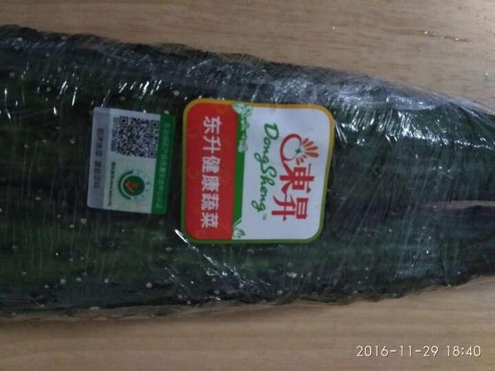 东升农场 刺青瓜 约500g 新鲜蔬菜 晒单图