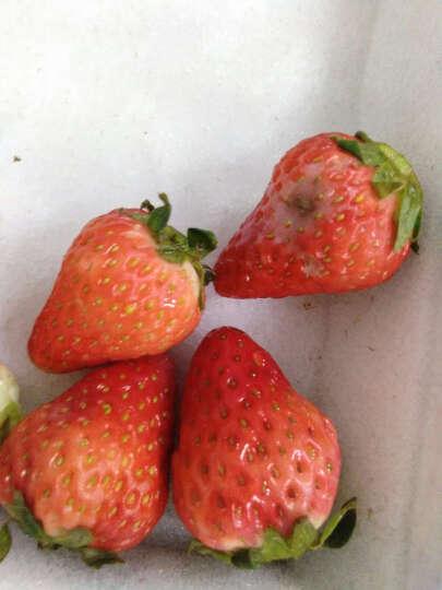 佳利麦 四川双流奶油草莓3盒装 晒单图