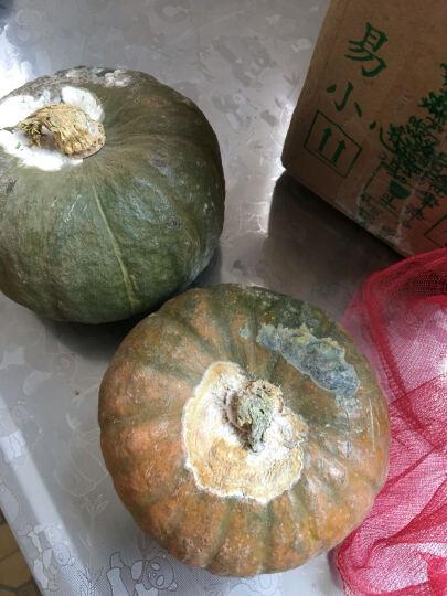 山东潍坊迷你贝贝小南瓜 现摘新鲜青皮瓜 时令应季农家蔬菜绿瓜果 宝宝营养辅食 10kg 晒单图