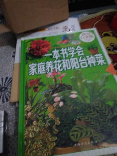 一本书学会家庭养花和阳台种菜养花入门在阳台上种菜手把手教你阳台种菜家庭种菜书绿色蔬菜种植书 晒单图