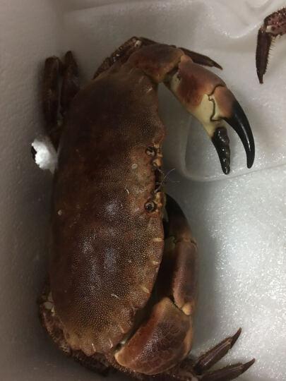 【活鲜】鲜动生活 法国活黄金蟹 600g-800g/只 面包蟹 不活包赔 晒单图
