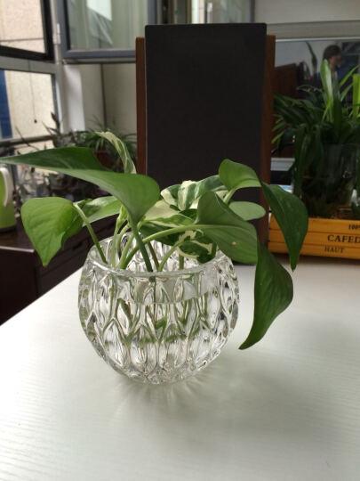 CG  玻璃花瓶 水培花瓶 透明花瓶花艺  花瓶 小 花器 卷口烟灰花瓶(大号+小号不带花) 晒单图