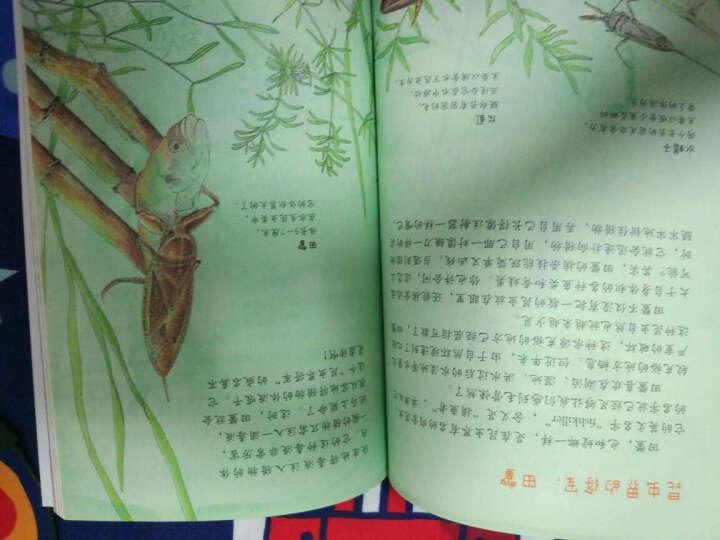 我的自然笔记:百变昆虫 晒单图