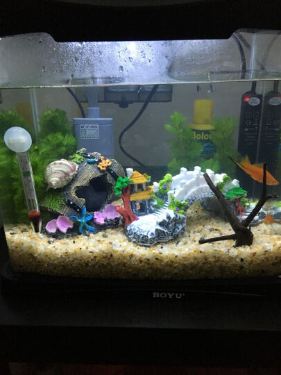 博宇dsn乌龟热带鱼两用鱼缸玻璃水族箱造景胜超白