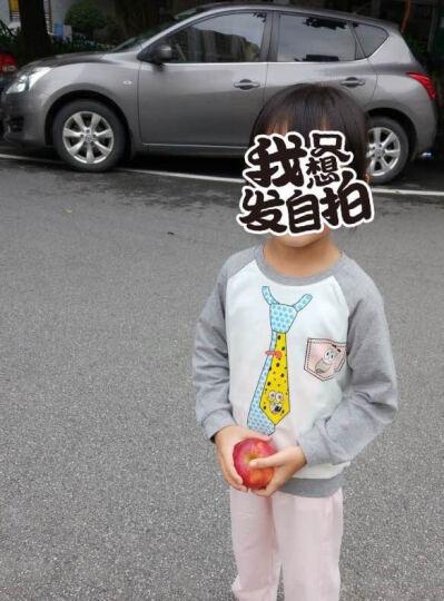 海绵宝宝 秋季新款童装 女童长袖外套 卫衣 灰色 100 晒单图