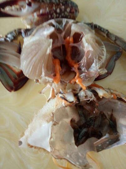 宁波特产 咸蟹 野生梭子蟹 咸呛蟹 红膏炝蟹 8A级800g-1200g装海鲜 晒单图