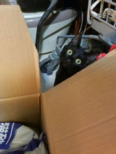 伟嘉 (Whiskas)宠物 成猫猫粮香酥牛柳味 1.3kg套装(1.3KG/袋+京东来点)一键购买 晒单图
