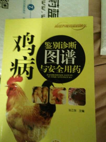 鸡病鉴别诊断图谱与安全用药 高效养鸡技术养鸡的书鸡养殖技术大全书籍 鸡病快速诊断与防治技术 晒单图
