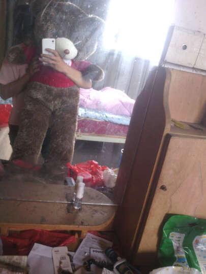 魔法龙 大号毛衣泰迪熊公仔抱枕刺猬熊抱抱熊大狗熊毛绒玩具靠垫布娃娃玩偶生日礼物送女生 美国条纹旗款刺猬熊 1.2米 晒单图