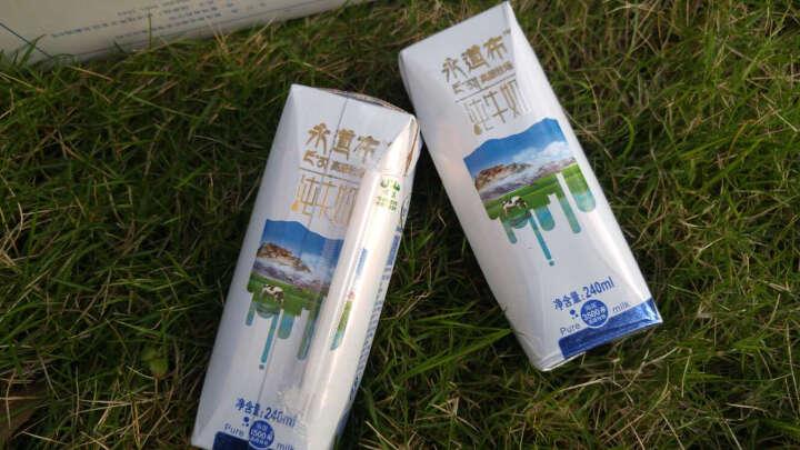 圣湖 永道布纯牛奶240ml*12盒 儿童早餐奶奶青海牧场风味纯奶整箱 晒单图