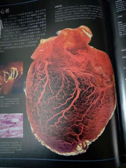 图解人体大百科 晒单图