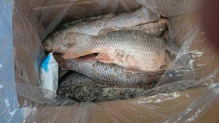 【查干湖馆】查干湖 有机野生鲤鱼多条 10斤15斤一箱 礼盒装淡水鱼 晒单图