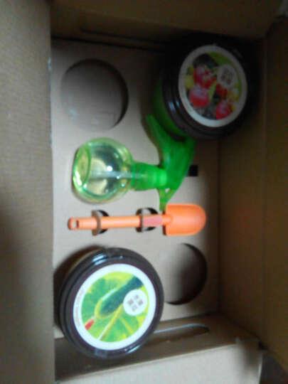 家庭园艺亲子种植9种植物可选儿童创意DIY杯子栽培蔬果迷你植物小盆栽办公桌饰品含种植工具 4杯(珍珠番茄+红姑娘+水果黄瓜+宝石草莓) 晒单图