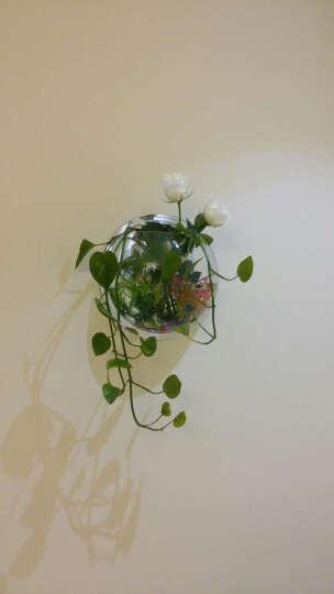 白领公社 鱼缸壁挂鱼缸家居装饰迷你壁式生态造景亚克力小鱼缸水族箱 325mm绿色 晒单图
