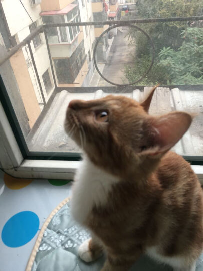 TOM CAT宠物猫罐头猫零食  成猫幼猫汤汁罐头 猫湿粮170g* 猫罐头猫咪零食 深红色 金枪鱼+鲣鱼+蟹肉 晒单图