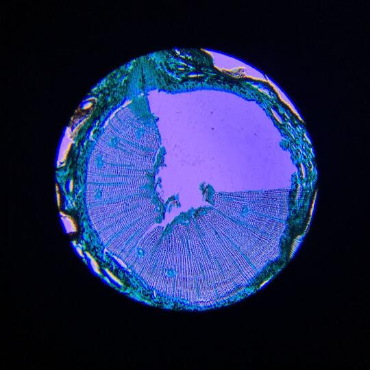 SAGA萨伽专业儿童学生生物显微镜1600倍便携科普套装可接电脑高倍高清畜牧养殖美容 套餐3=标配+延长筒+卡口(可接单反相机拍摄) 晒单图