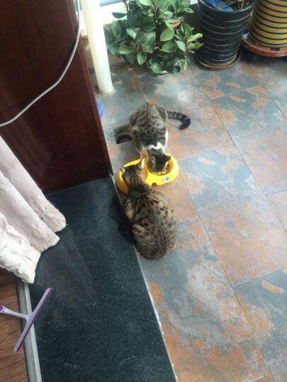 伟嘉幼猫哺乳期猫粮吞拿鱼及三文鱼味1.2kg 晒单图