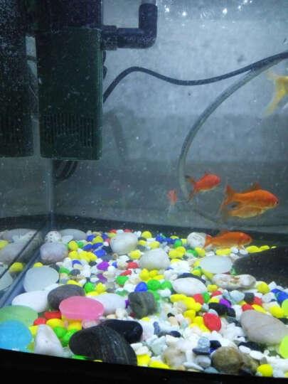 鱼缸造景底砂水族箱天然装饰布景石头乌龟缸造景用品 玉彩石小粒300g 晒单图