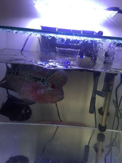奇溢自然 鱼缸水族箱照明灯节能LED灯多角度水草小夹灯 D-801+Y703*2 晒单图