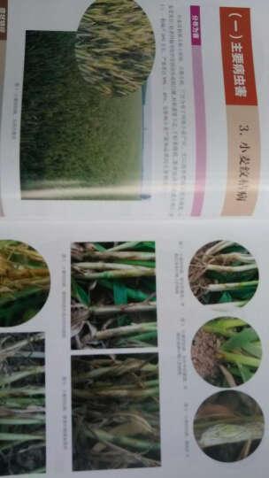 粮棉油作物病虫原色图谱 晒单图