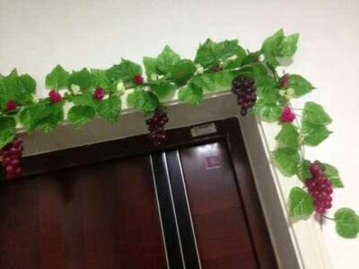 藤槐 仿真水果蔬菜套装假水果模型摄影道具家居橱柜厨房茶几装饰品 36粒小提子紫色 晒单图