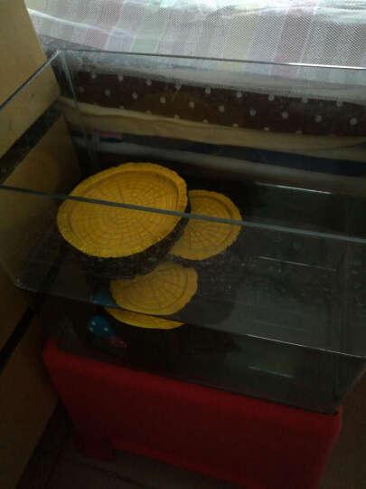 爬虫树脂躲避洞穴乌龟蜥蜴守宫蜘蛛蝎子宠物蛇爬虫箱造景水盆食盆 晒单图