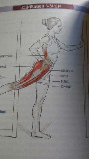 拉伸运动系统训练-全彩图解第2版-体育运动训练丛 晒单图