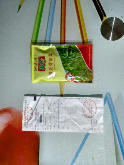 果花 红油香椿芽苗菜种子 绿色 蔬菜种子 可无土栽培 10g/袋 晒单图