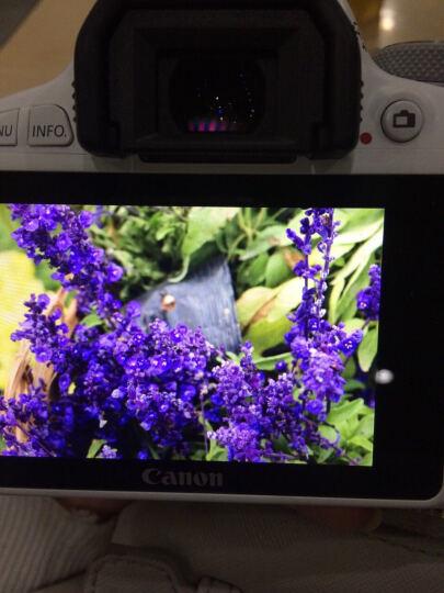 佳能(Canon)EOS kiss x9 单反相机【国内型号200D】 白色kiss X9 KISS X7 双镜头 晒单图