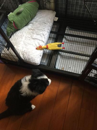 宠乐 狗狗用品 宠物玩具 狗狗玩具球 七彩铃铛球 铃铛玩具 橡胶球 可爱发声玩具 晒单图