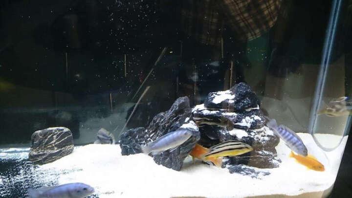 摆渡人 鱼饲料硬骨鱼观赏鱼鱼食鱼粮 三湖慈鲷专用粮400g 晒单图